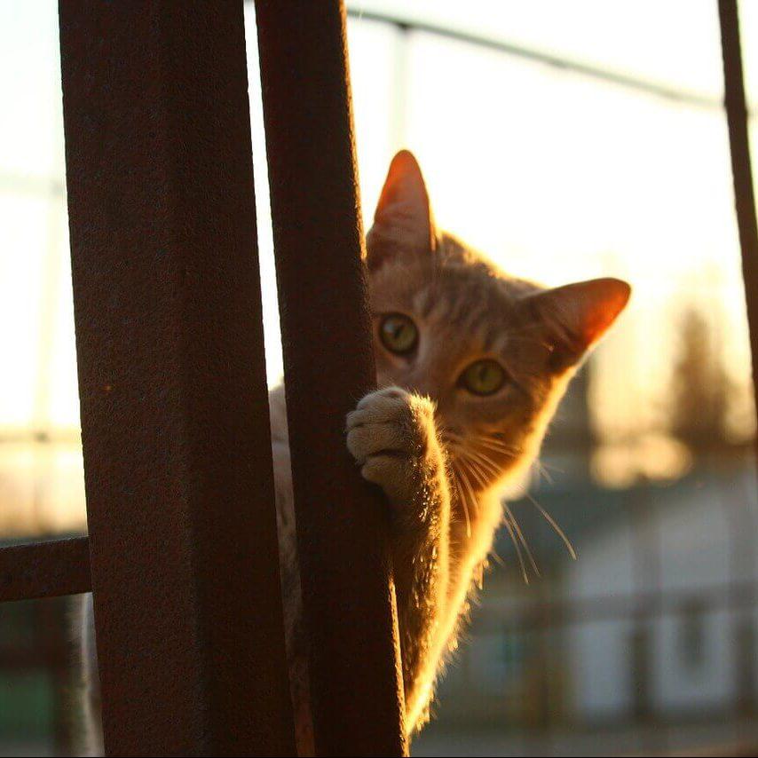 cat-1040815_1280(1)(1)